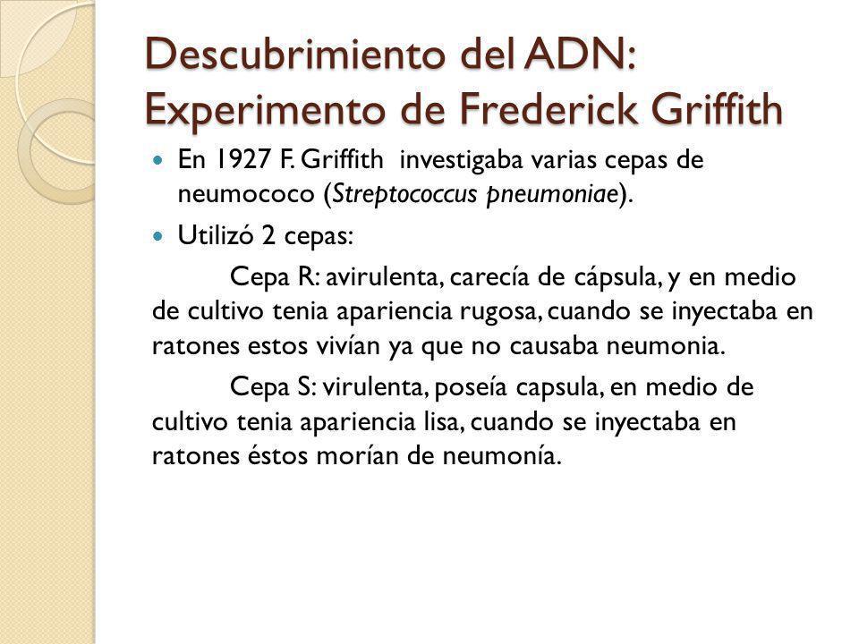 Descubrimiento del ADN: Experimento de Frederick Griffith En 1927 F.