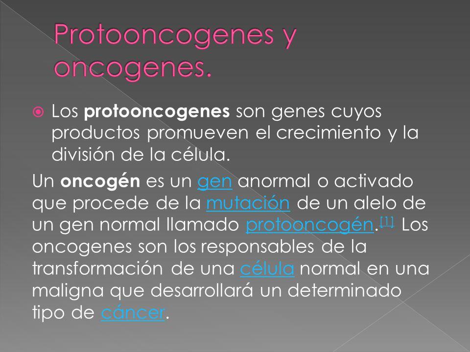Los protooncogenes son genes cuyos productos promueven el crecimiento y la división de la célula. Un oncogén es un gen anormal o activado que procede