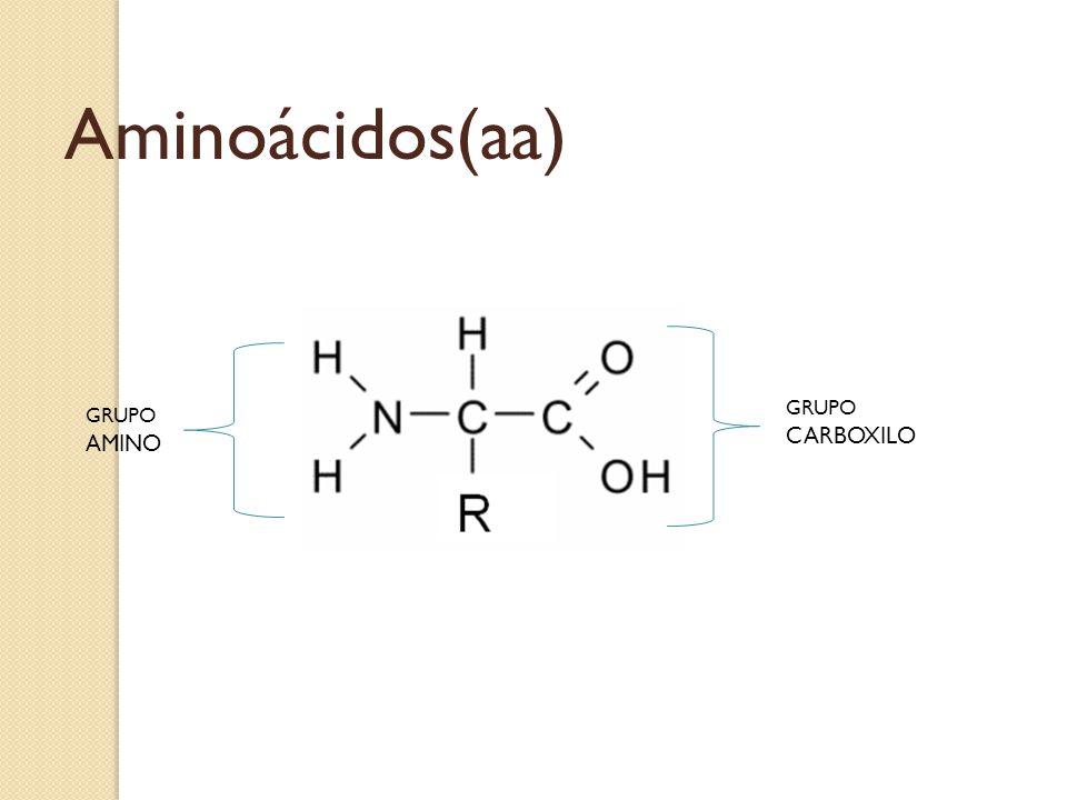 GRUPO CARBOXILO GRUPO AMINO Aminoácidos(aa)