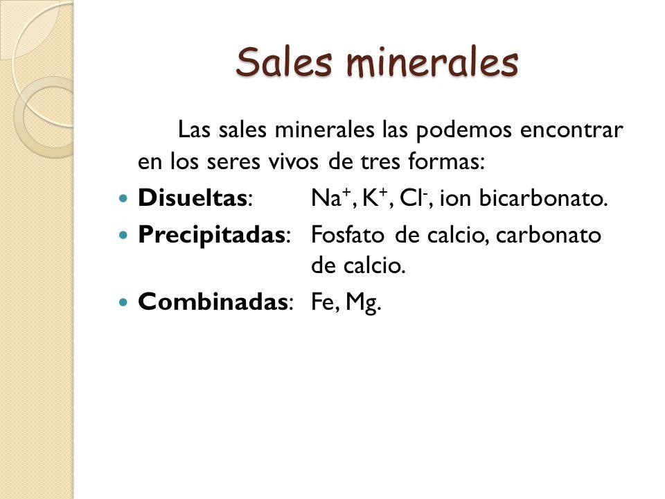 Función de las Sales Minerales Las sales minerales colaboran en diferentes procesos importantes para el funcionamiento del cuerpo humano.