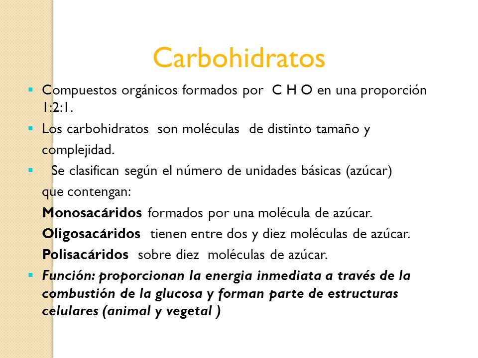 Carbohidratos Compuestos orgánicos formados por C H O en una proporción 1:2:1. Los carbohidratos son moléculas de distinto tamaño y complejidad. Se cl