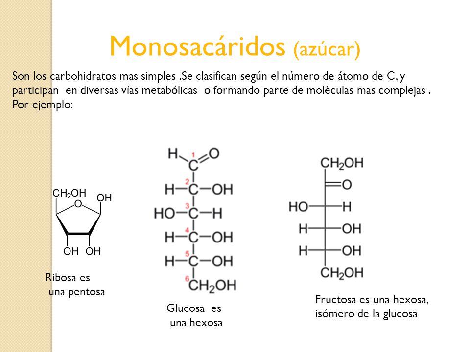 Monosacáridos (azúcar) Ribosa es una pentosa Glucosa es una hexosa Fructosa es una hexosa, isómero de la glucosa Son los carbohidratos mas simples.Se