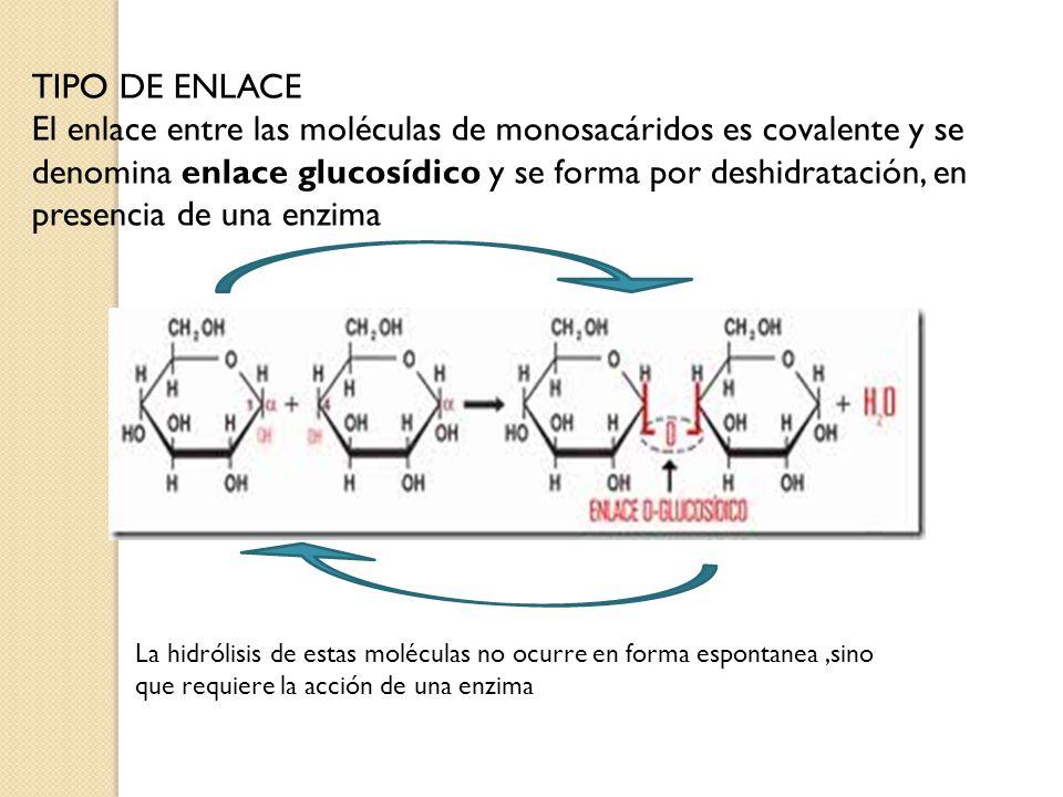 TIPO DE ENLACE El enlace entre las moléculas de monosacáridos es covalente y se denomina enlace glucosídico y se forma por deshidratación, en presenci