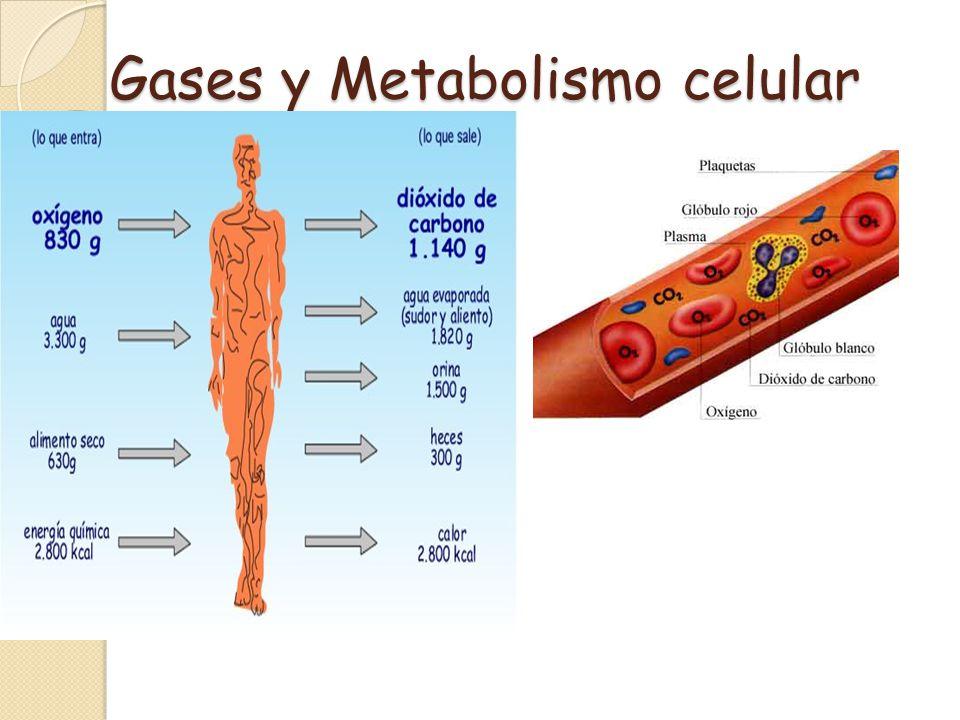 Maltosa, azúcar presente en la cebada fermentada formada por dos glucosa Oligosacáridos: Disacáridos Son oligosacaridos compuestos por dos monosacáridos unidos por enlace glucosídico Sacarosa, presente en la caña de azúcar y remolacha, formada por una glucosa y una fructosa Lactosa, esta presente en la leche, formada por una glucosa y una galactosa