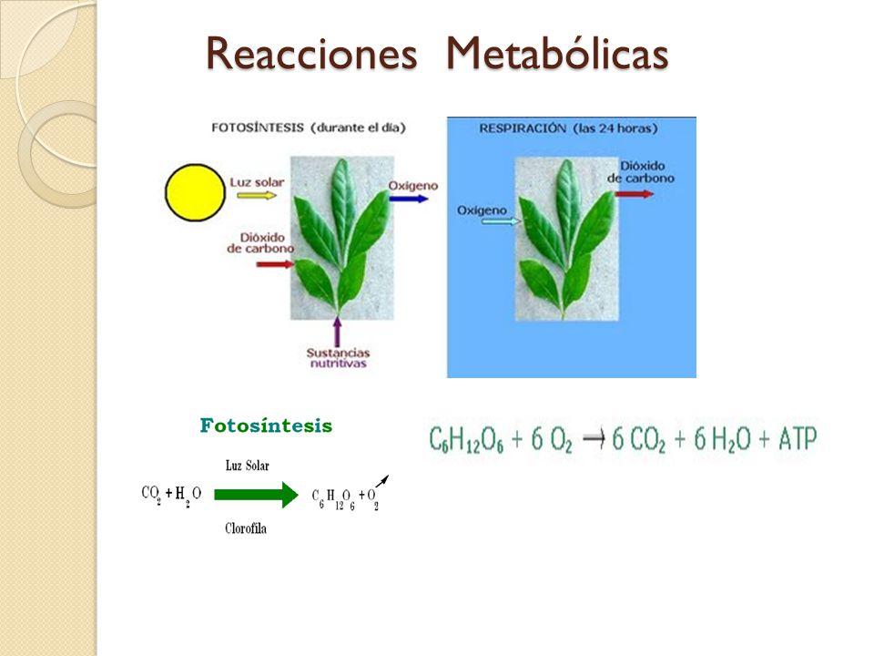Reacciones Metabólicas