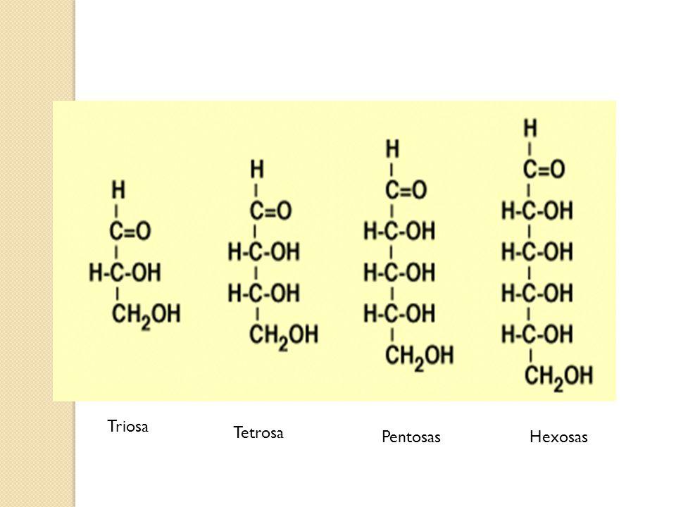 Aminoácidos(aa) Características: Formado por C, H, O y N, en ocasiones S.