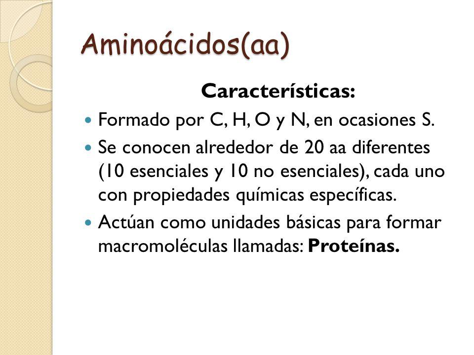 Aminoácidos(aa) Características: Formado por C, H, O y N, en ocasiones S. Se conocen alrededor de 20 aa diferentes (10 esenciales y 10 no esenciales),