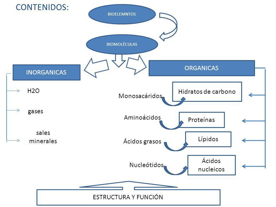 CONTENIDOS: BIOELEMNTOS BIOMOLÉCULAS INORGANICAS ORGANICAS H2O sales minerales gases Monosacáridos Hidratos de carbono Aminoácidos Proteínas Ácidos gr