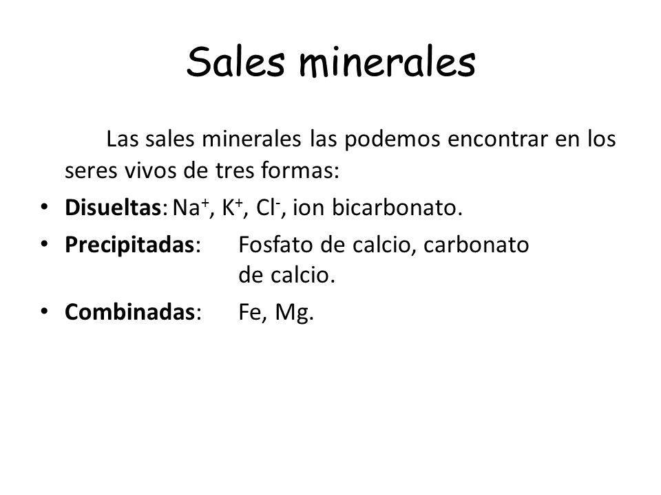 Sales minerales Las sales minerales las podemos encontrar en los seres vivos de tres formas: Disueltas:Na +, K +, Cl -, ion bicarbonato. Precipitadas: