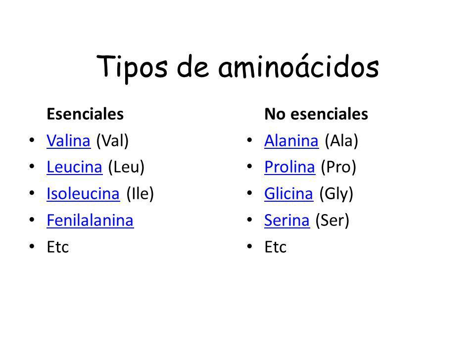 Tipos de aminoácidos Esenciales Valina (Val) Valina Leucina (Leu) Leucina Isoleucina (Ile) Isoleucina Fenilalanina Etc No esenciales Alanina (Ala) Ala