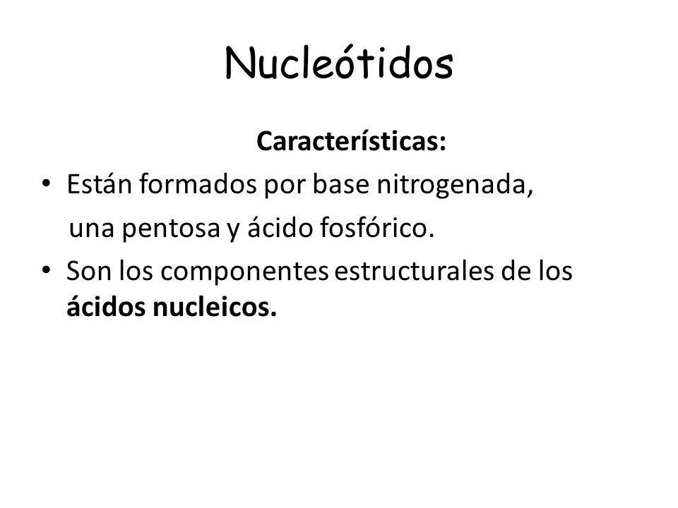 Nucleótidos Características: Están formados por base nitrogenada, una pentosa y ácido fosfórico. Son los componentes estructurales de los ácidos nucle