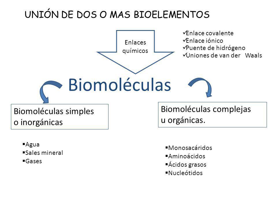 Biomoléculas UNIÓN DE DOS O MAS BIOELEMENTOS Biomoléculas simples o inorgánicas Biomoléculas complejas u orgánicas. Agua Sales mineral Gases Monosacár