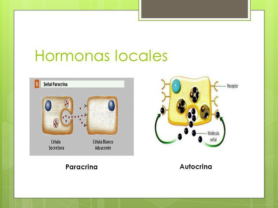 Clases Químicas de Hormonas Hormonas Liposolubles.