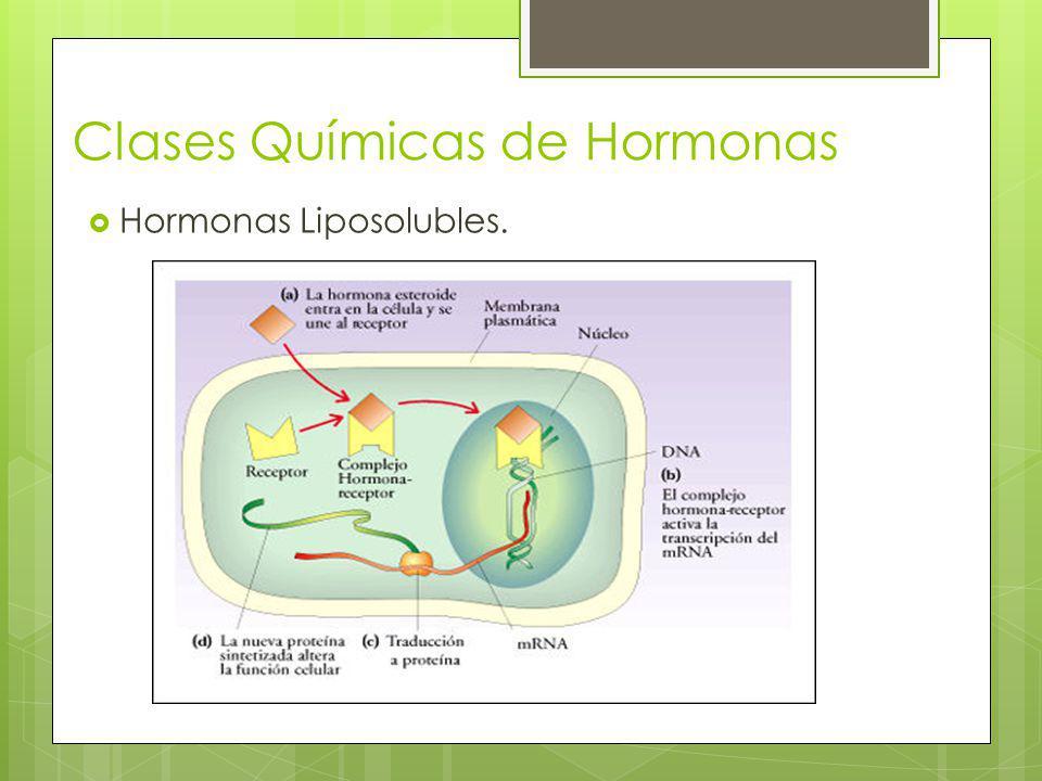 Mecanismo de acción de las hormonas liposolubles.