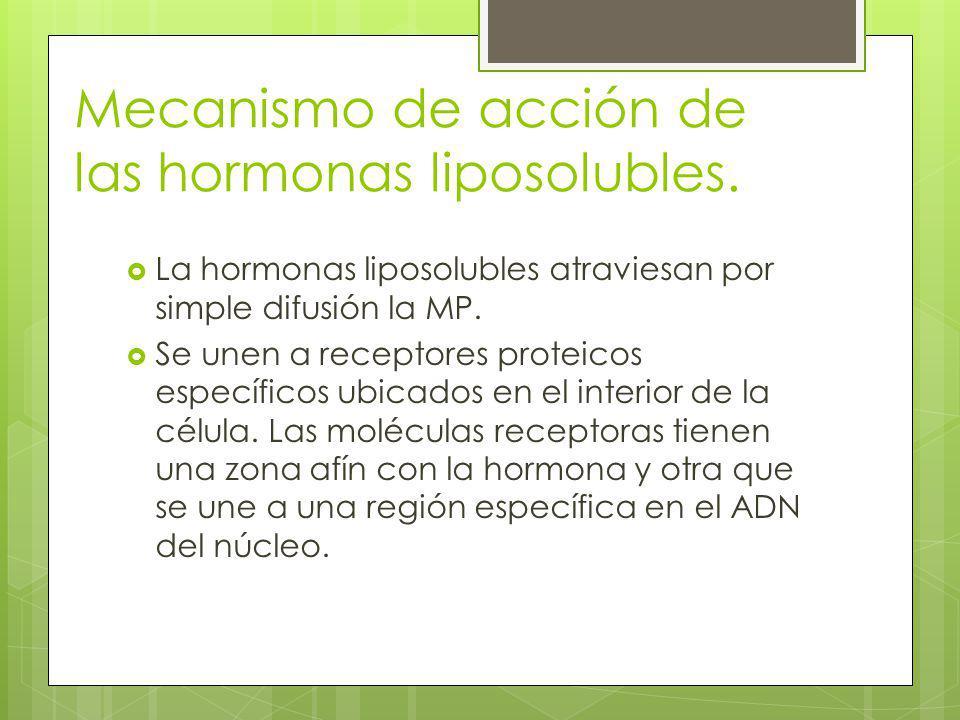 Mecanismo de acción de las hormonas liposolubles. La hormonas liposolubles atraviesan por simple difusión la MP. Se unen a receptores proteicos especí