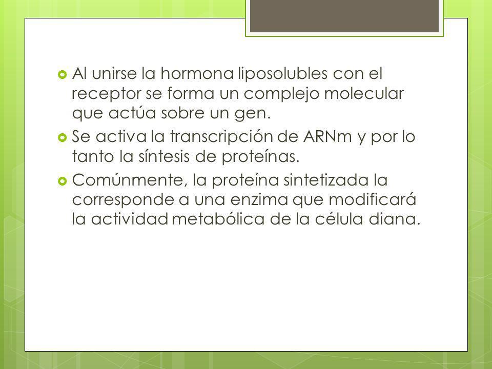Al unirse la hormona liposolubles con el receptor se forma un complejo molecular que actúa sobre un gen. Se activa la transcripción de ARNm y por lo t
