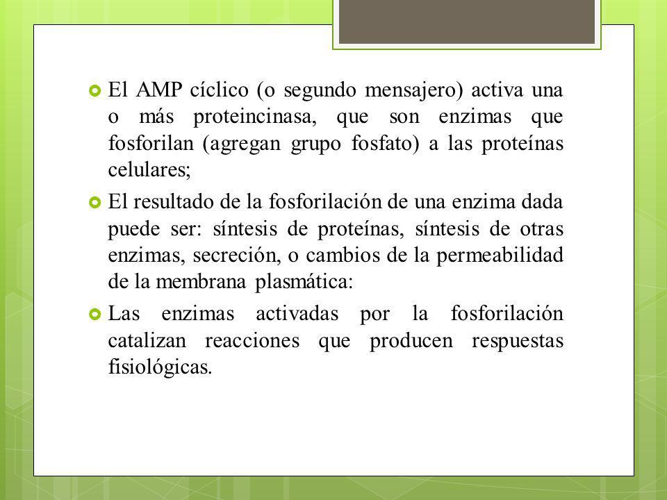 Tipos de hormonas hidrosolubles.Aminas: compuestos de baja masa molecular que derivan del a.a.
