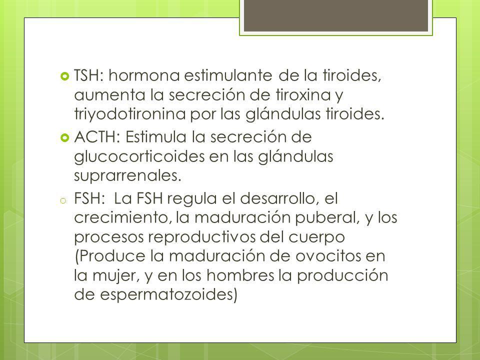 TSH: hormona estimulante de la tiroides, aumenta la secreción de tiroxina y triyodotironina por las glándulas tiroides. ACTH: Estimula la secreción de