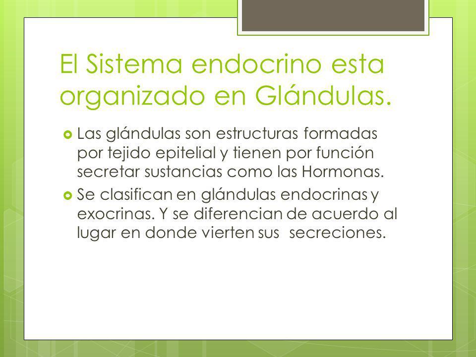 El Sistema endocrino esta organizado en Glándulas. Las glándulas son estructuras formadas por tejido epitelial y tienen por función secretar sustancia