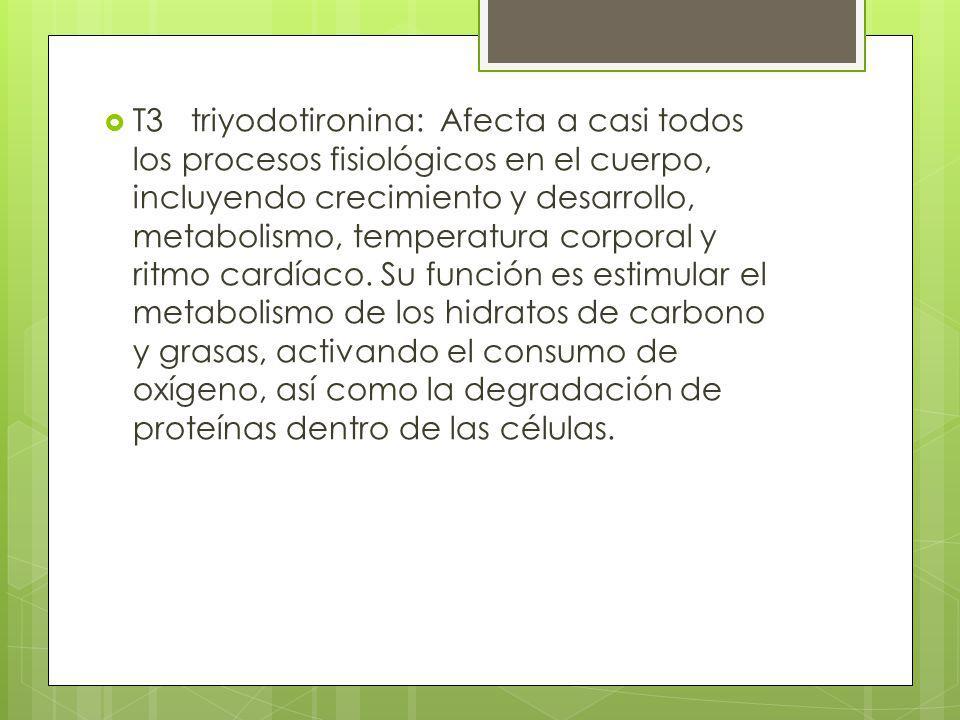 T3 triyodotironina: Afecta a casi todos los procesos fisiológicos en el cuerpo, incluyendo crecimiento y desarrollo, metabolismo, temperatura corporal
