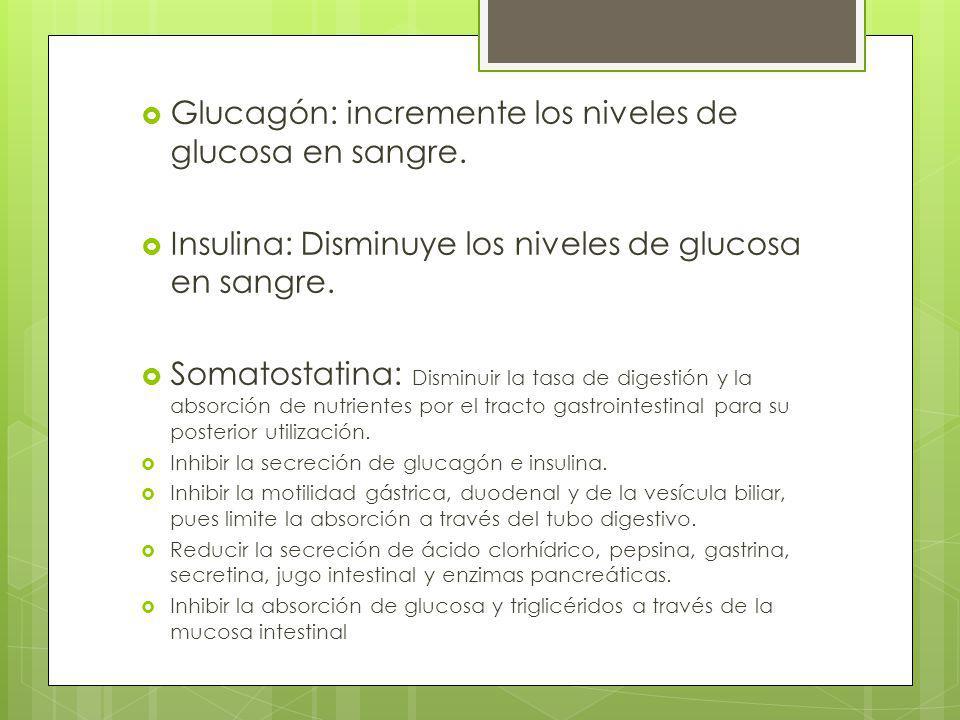 Glucagón: incremente los niveles de glucosa en sangre. Insulina: Disminuye los niveles de glucosa en sangre. Somatostatina: Disminuir la tasa de diges