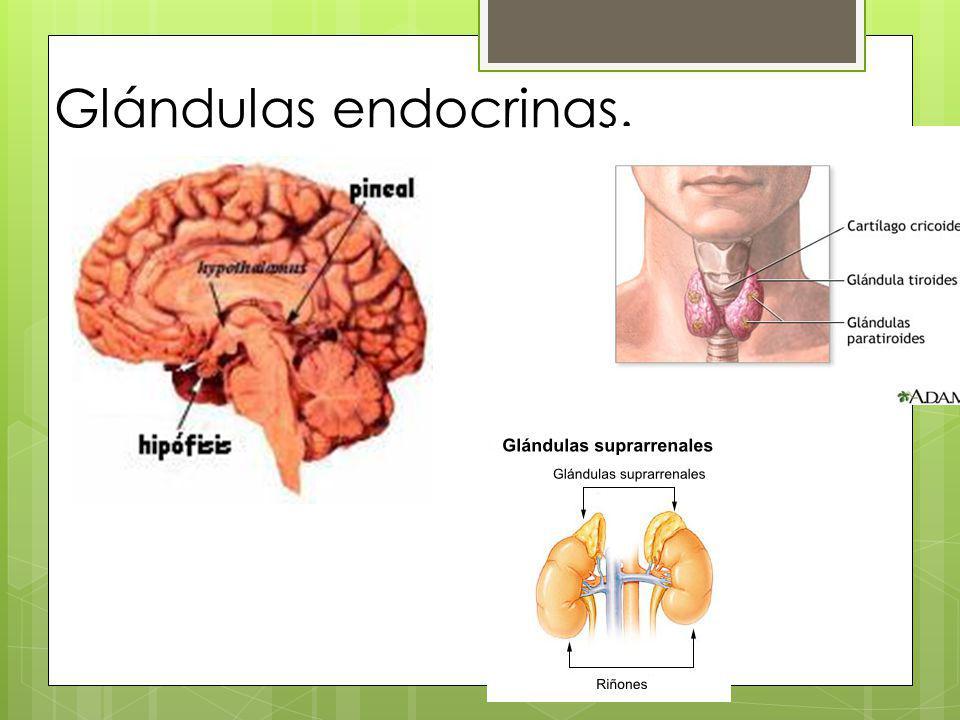 Funciones generales del Sistema endocrino.Las hormonas regulan: Las reacciones metabólicas.
