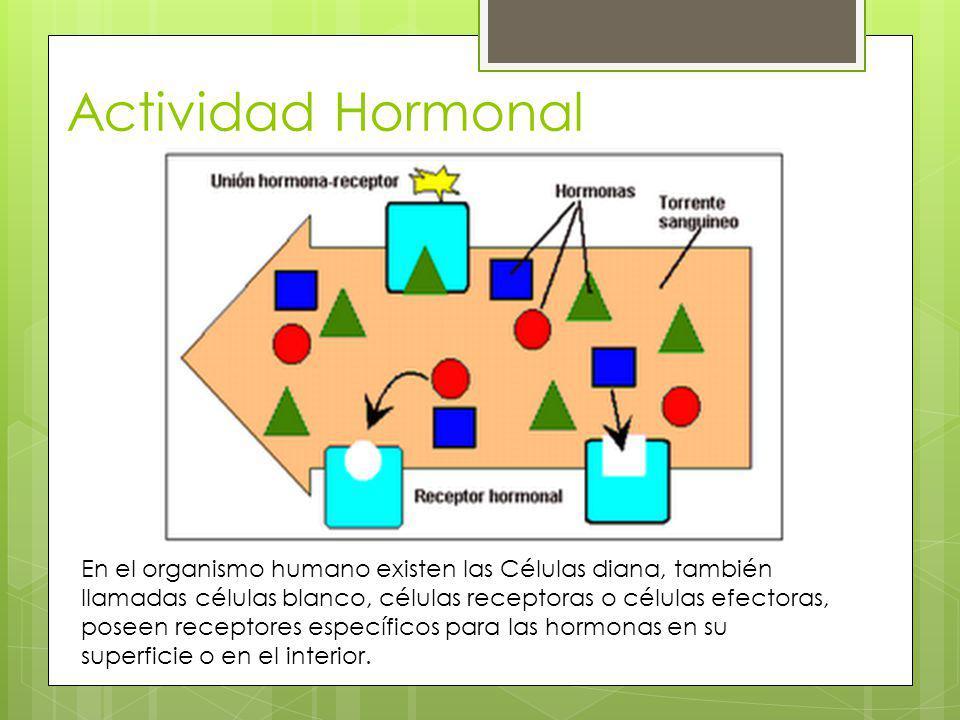 Actividad Hormonal En el organismo humano existen las Células diana, también llamadas células blanco, células receptoras o células efectoras, poseen r