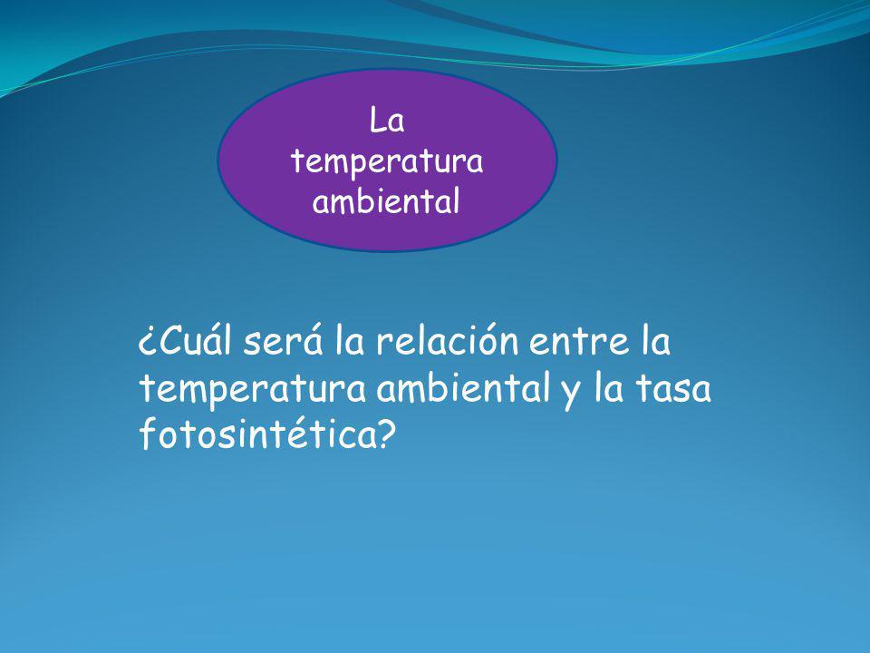 La temperatura ambiental ¿Cuál será la relación entre la temperatura ambiental y la tasa fotosintética?