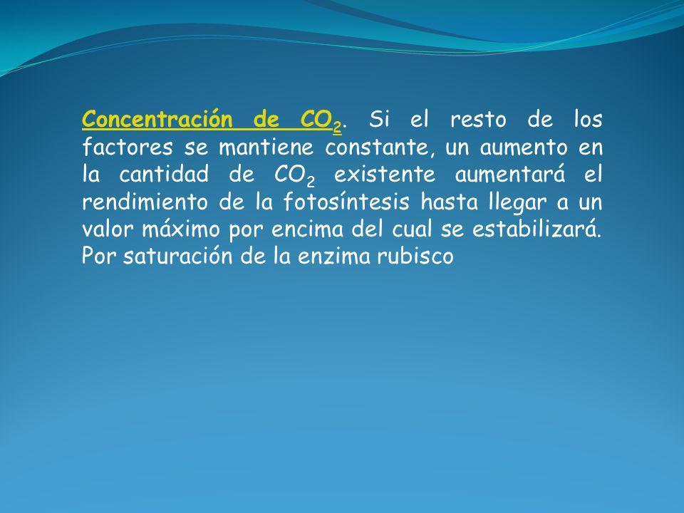 Concentración de CO 2 Concentración de CO 2. Si el resto de los factores se mantiene constante, un aumento en la cantidad de CO 2 existente aumentará