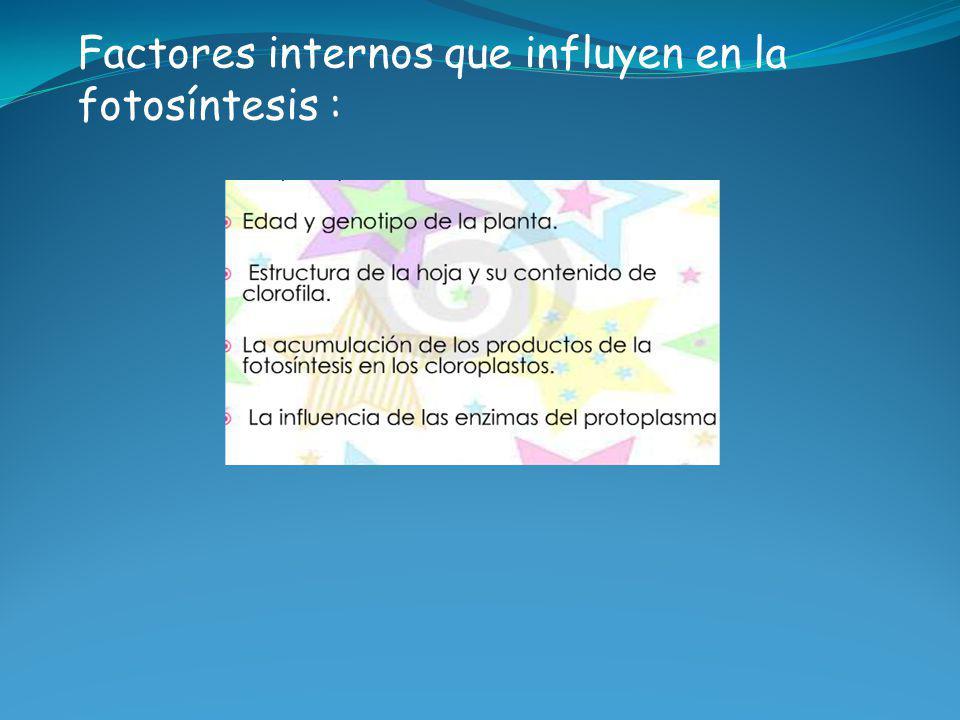 Factores internos que influyen en la fotosíntesis :