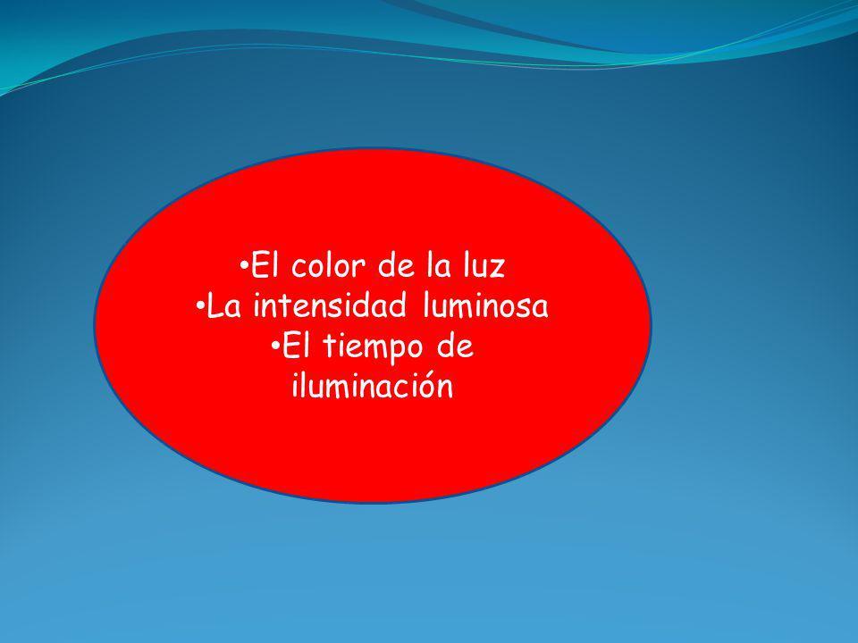El color de la luz La intensidad luminosa El tiempo de iluminación