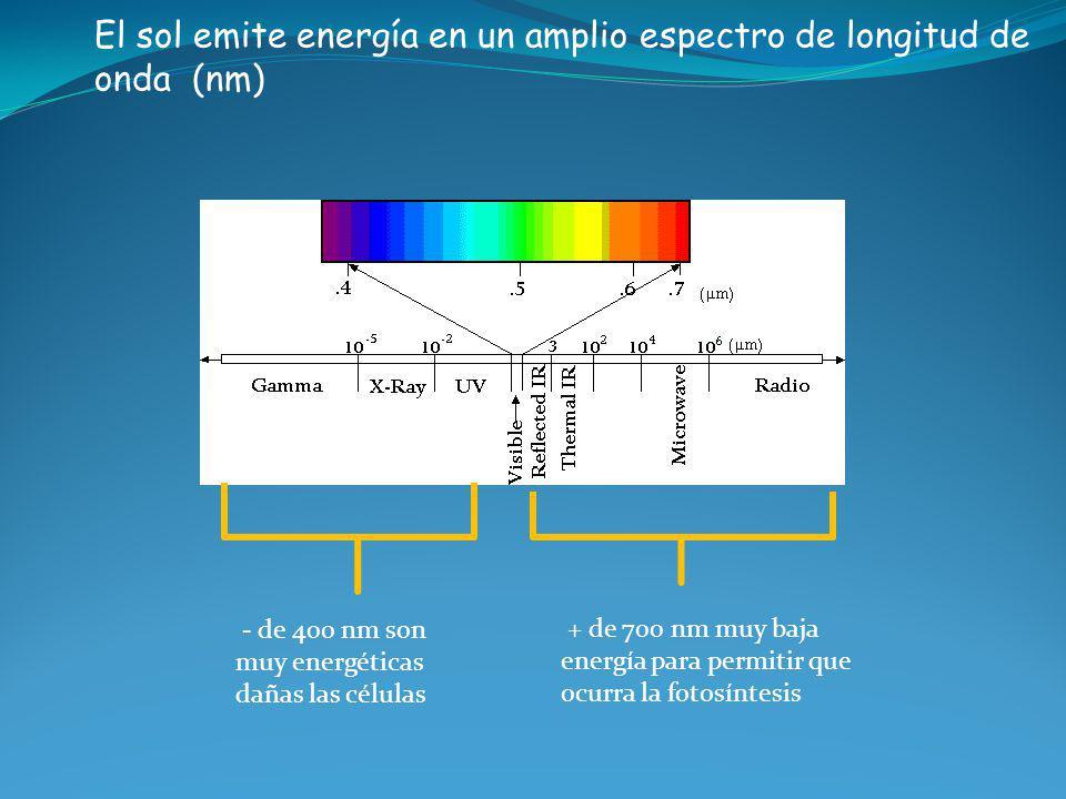 El sol emite energía en un amplio espectro de longitud de onda (nm) - de 400 nm son muy energéticas dañas las células + de 700 nm muy baja energía par