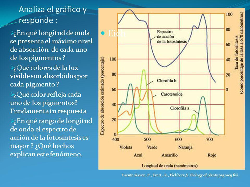 Analiza el gráfico y responde : Eich ¿En qué longitud de onda se presenta el máximo nivel de absorción de cada uno de los pigmentos ? ¿Qué colores de
