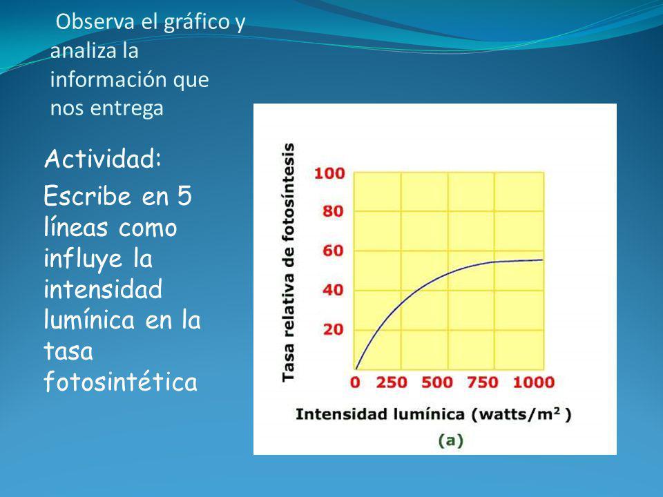 Observa el gráfico y analiza la información que nos entrega Actividad: Escribe en 5 líneas como influye la intensidad lumínica en la tasa fotosintétic