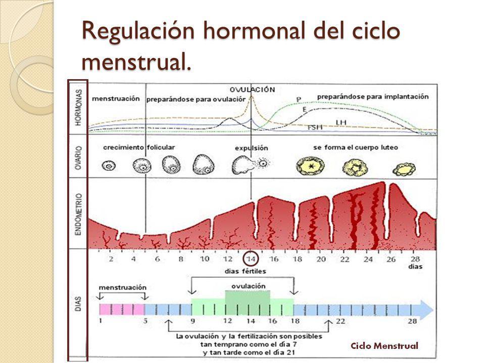 Regulación hormonal del ciclo menstrual.