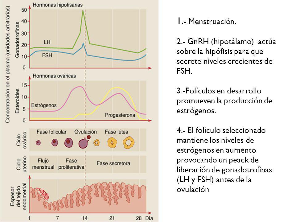 1.- Menstruación.