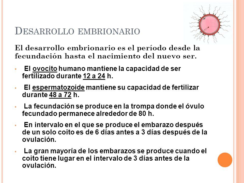 El desarrollo embrionario es el período desde la fecundación hasta el nacimiento del nuevo ser. El ovocito humano mantiene la capacidad de ser fertili