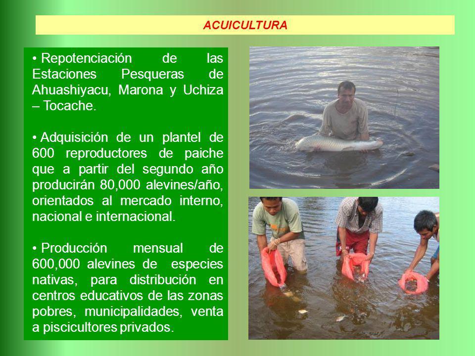 Repotenciación de las Estaciones Pesqueras de Ahuashiyacu, Marona y Uchiza – Tocache. Adquisición de un plantel de 600 reproductores de paiche que a p