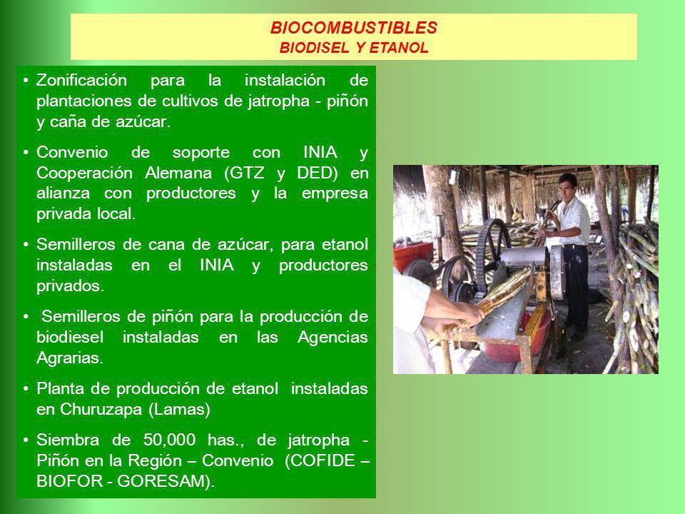Zonificación para la instalación de plantaciones de cultivos de jatropha - piñón y caña de azúcar. Convenio de soporte con INIA y Cooperación Alemana