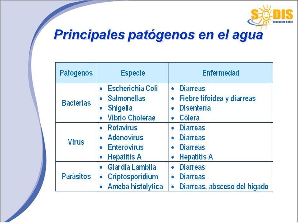 Principales patógenos en el agua
