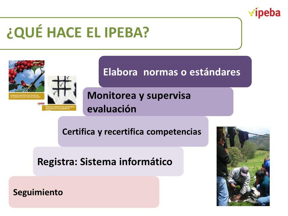 ¿QUÉ HACE EL IPEBA? Monitorea y supervisa evaluación Elabora normas o estándares Registra: Sistema informático Certifica y recertifica competencias Se