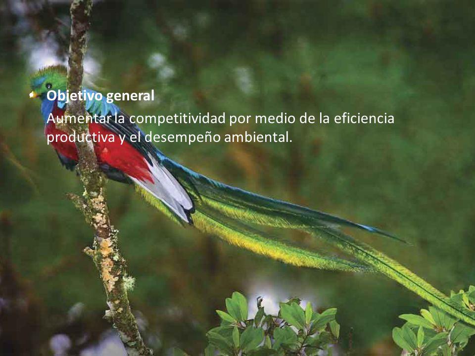 Objetivo general Aumentar la competitividad por medio de la eficiencia productiva y el desempeño ambiental.