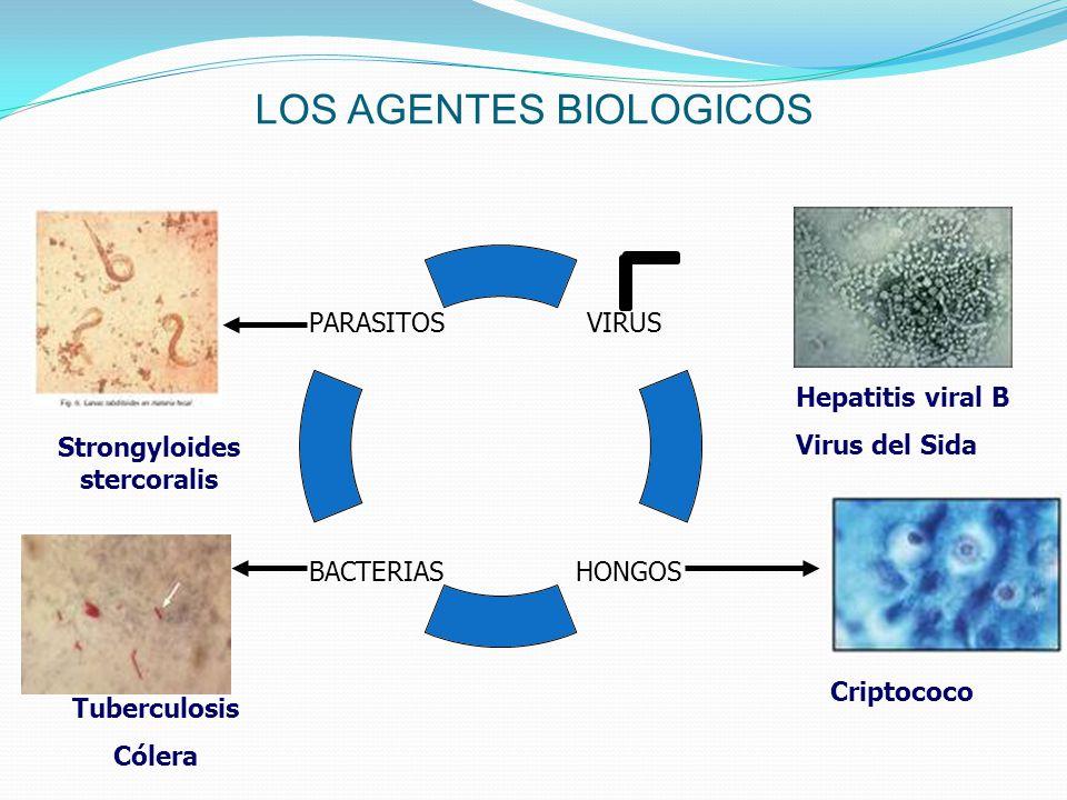 LOS AGENTES BIOLOGICOS Hepatitis viral B Virus del Sida Strongyloides stercoralis Criptococo Tuberculosis Cólera