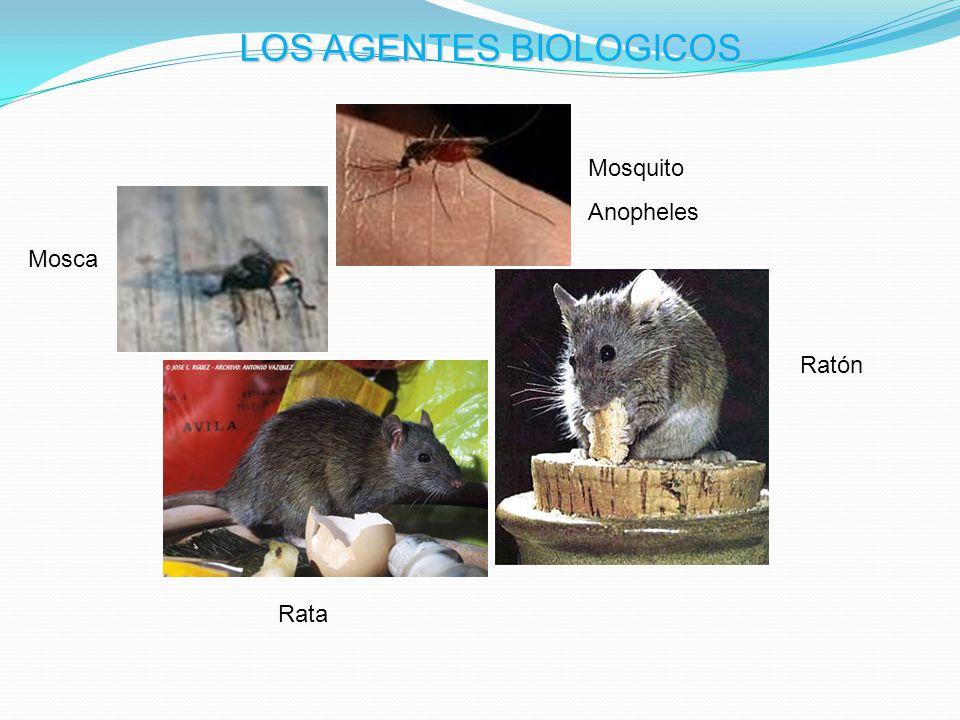 LOS AGENTES BIOLOGICOS Rata Mosquito Anopheles Mosca Ratón