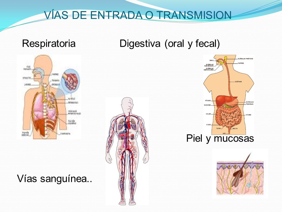 VÍAS DE ENTRADA O TRANSMISION Respiratoria Digestiva (oral y fecal) Piel y mucosas Vías sanguínea..