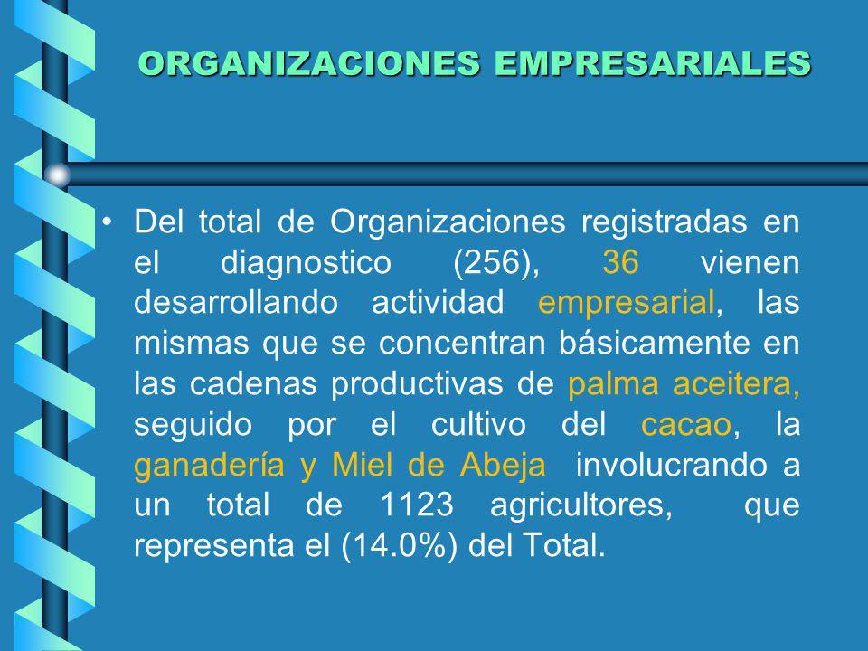 ORGANIZACIONES EMPRESARIALES ORGANIZACIONES EMPRESARIALES Del total de Organizaciones registradas en el diagnostico (256), 36 vienen desarrollando act