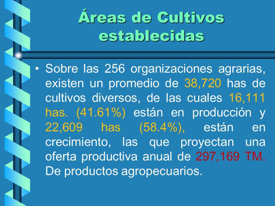 Áreas de Cultivos establecidas Sobre las 256 organizaciones agrarias, existen un promedio de 38,720 has de cultivos diversos, de las cuales 16,111 has