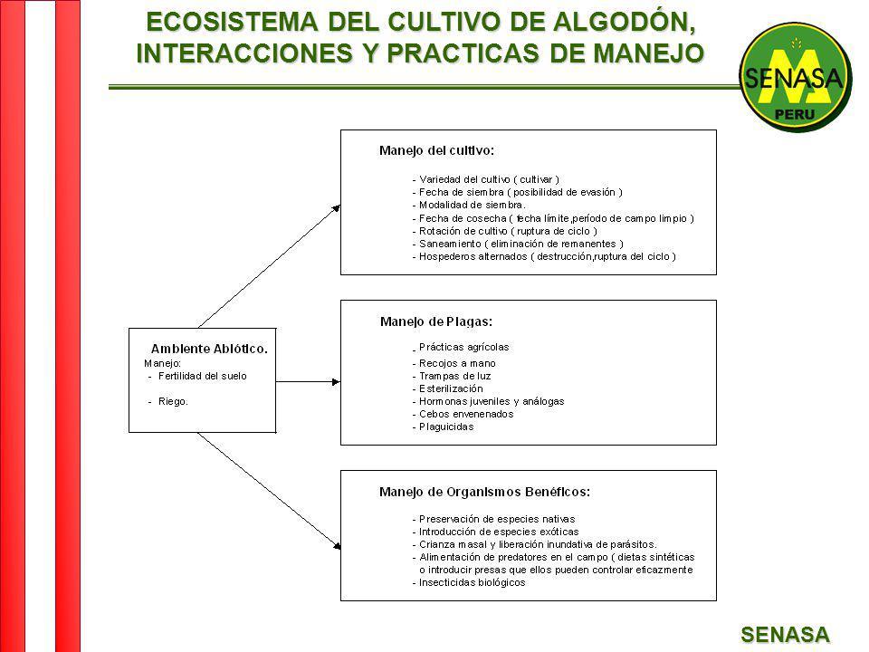 SENASA ECOSISTEMA DEL CULTIVO DE ALGODÓN, INTERACCIONES Y PRACTICAS DE MANEJO