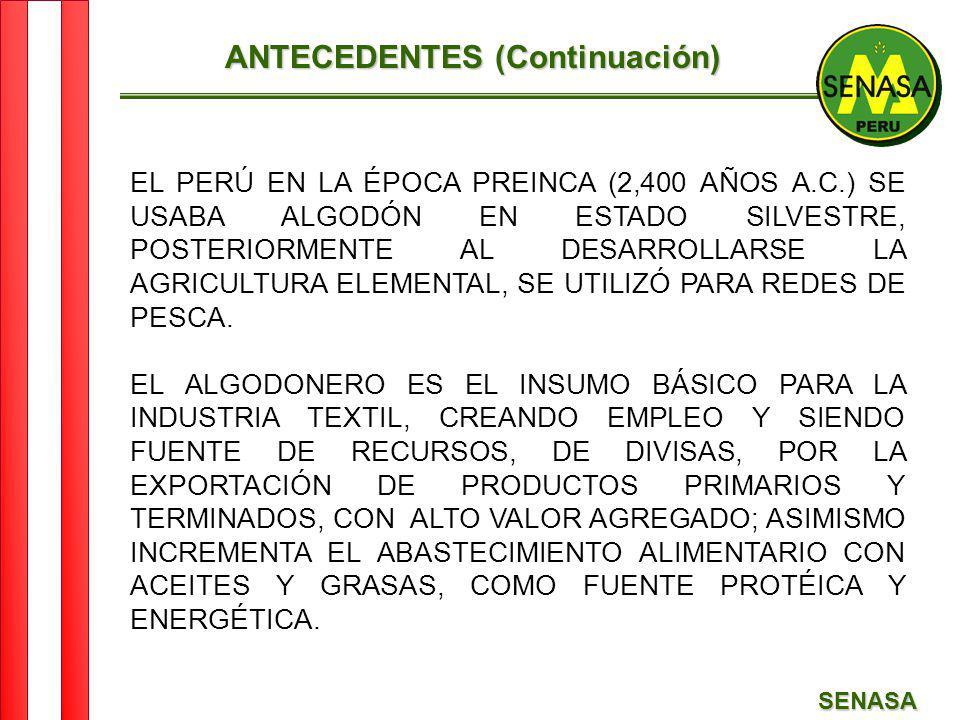 SENASA ANTECEDENTES (Continuación) EL PERÚ EN LA ÉPOCA PREINCA (2,400 AÑOS A.C.) SE USABA ALGODÓN EN ESTADO SILVESTRE, POSTERIORMENTE AL DESARROLLARSE