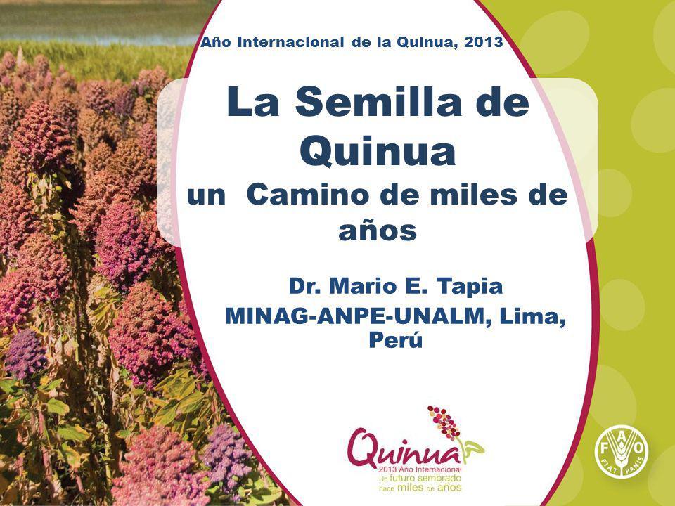 Año Internacional de la Quinua, 2013 La Semilla de Quinua un Camino de miles de años Dr. Mario E. Tapia MINAG-ANPE-UNALM, Lima, Perú